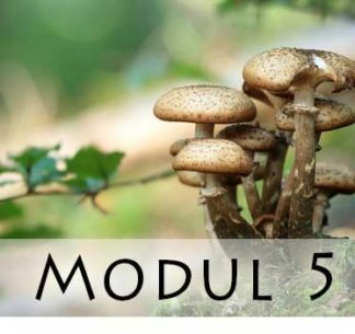 Modul 5 / Module 5
